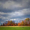 Tree Line On Sunset Hill In New Hampshire by Nancy Griswold
