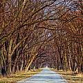 Tree Lined Lane by Carolyn Fox