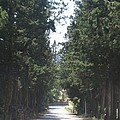 Tree Lined Street by Angela  Rose