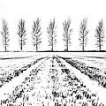 Tree Lines by Richard Burdon