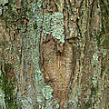 Tree Love by Natalie Long