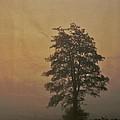 Tree by Odd Jeppesen
