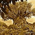 Tree Of Life In Sepia by Carol  Bradley