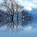 Tree Of Life by Sharon Lisa Clarke