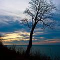 Tree Of Peace by Scott Wood