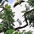 Tree Of Storks  by Harry Spitz