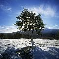 Tree On A Snow Covered Landscape by The Irish Image Collection