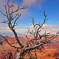 Tree Over Grand Canyon by Greg Wyatt