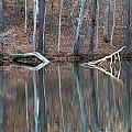 Tree Reflection by David Campbell