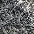 Tree Roots by Natthawut Punyosaeng