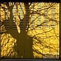 Tree Shadow by Bernard Jaubert