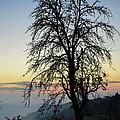 Tree Silhouette At Sunset 2 by Bruno Santoro