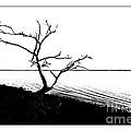 Tree Silhouette by Bruce Bain