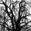 Tree Silhouette by James BO Insogna