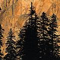 Tree Silhouettes In Front Of Cliff Face by Natural Selection David Ponton