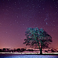 Tree Snow And Stars by Paul McGee