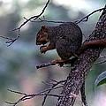 Tree Top Nut by Elizabeth Winter