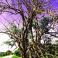 Tree by Vasil Georgiev
