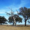 Treegedy by Mark Centennial