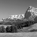 Treeline Across Alpi Di Siusi In The Dolomites by Greg Matchick