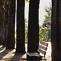 Trees And Bench by Jeremy Woodhouse