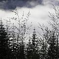 Trees And Clouds by Catherine Helmick