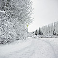 Trees And Dirt Path In Snowy Landscape by K.Magnusson