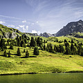Trees And Lake In Grassy Rural Landscape by Manuel Sulzer