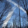 Trees And Trails by Ausra Huntington nee Paulauskaite