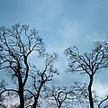 Trees. Autumn. by Konstantin Dikovsky