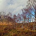 Trees Below Stob Dearg by Gary Eason