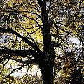 Trees During Autumn by The Irish Image Collection