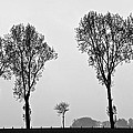 Trees by Eric Tressler