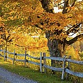 Trees In Autumn Colours And A Fence by David Chapman