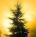 Trees In Fog At Sunrise by David Nunuk