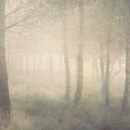 Trees In Mist On Linen by Paul Grand Image