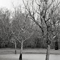 Trees In The Mist 2 by Jonathan Garrett