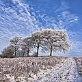 Trees In The Snow by John Farnan