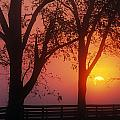 Trees In The Sunrise by Natural Selection Tony Sweet