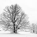 Trees In Winter by Michal Boubin