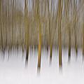 Trees by Michele Pietrangelo