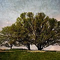 Trees Of Life by Trish Tritz