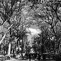 Trees On The Mall In Central Park In Black And White by Rob Hans