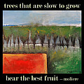 Trees That Are Slow To Grow Poster by Tim Nyberg