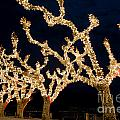 Trees With Lights by Mats Silvan
