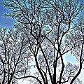Treescapade by Dan Stone