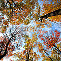 Treetops by Elena Elisseeva