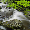 Tremont Spring In Great Smoky Mountains by Darrell Young