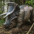 Triceratops by David Davis and Photo Researchers