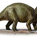 Triceratops Prorsus, A Prehistoric Era by Sergey Krasovskiy